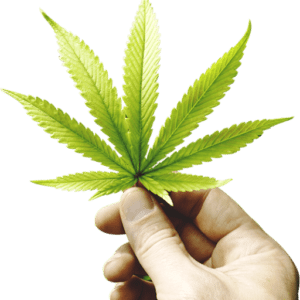 On Demand cannabis delivery app